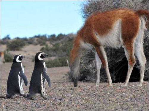 aimales de la patagonia
