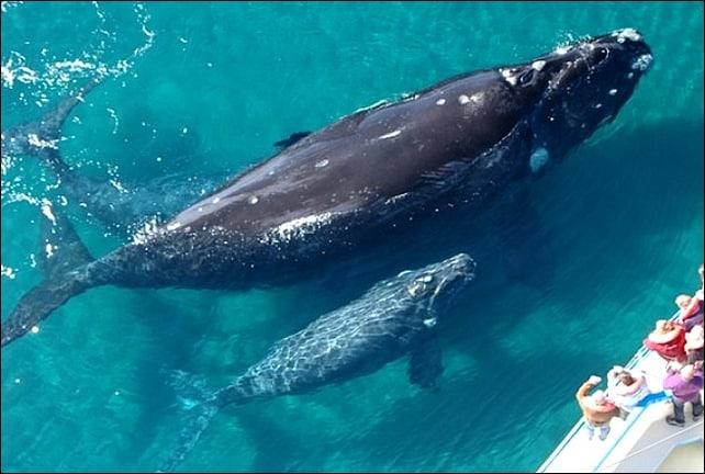 turismo Avistaje de ballenas en la patagonia